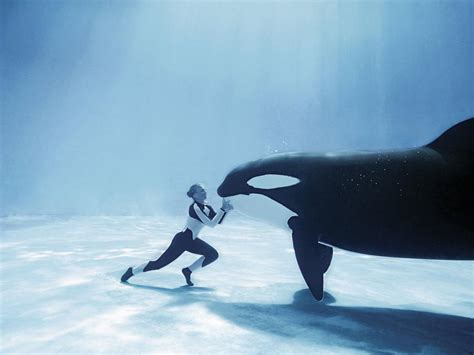 KILLER WHALE PICTURES, PICS, IMAGES AND PHOTOS FOR YOUR