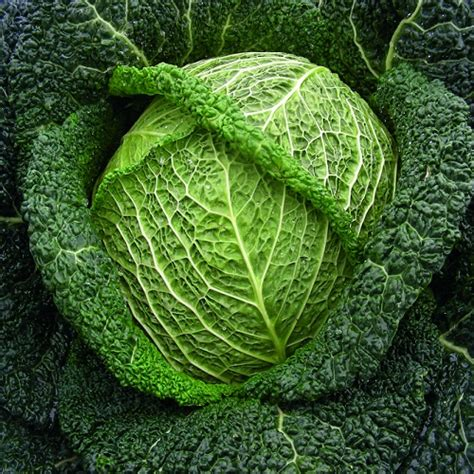 savoy-cabbage-winter-king-appx-750-seeds-3997-p