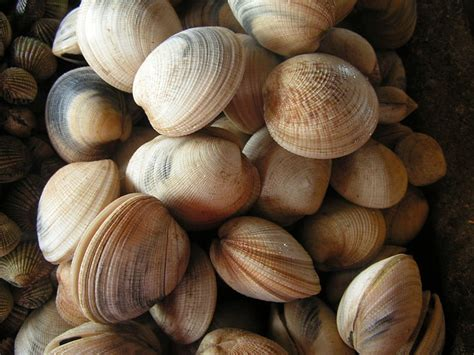 Bioaccumulation of Toxins in Shellfish and the